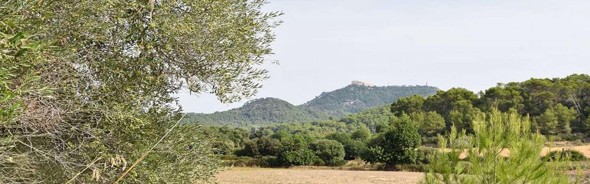 Cas Concos - Terreno de construcción de la finca con proyecto aprobado