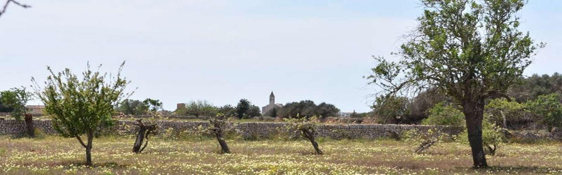 Parcela con proyecto de construcción aprobado en Santanyí